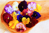 Flower Pansy