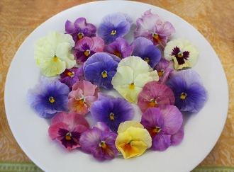 Flower Pansy Pastel Mix 50 Ct