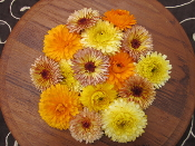 Flower Calendula 50 Ct