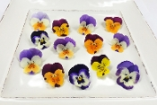 Flower Viola Bi-Color Mix 50 Ct