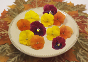 Flower Pansy Fall Colors Mix