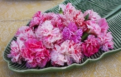 Flower Carnation Assorted 50 Ct