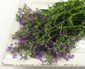 Flower Mint Lavender 50 Ct