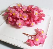 Flower Begonia Pink 50 Ct